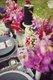7455-summerBrookeCourtneyPhotography06.jpg.jpe