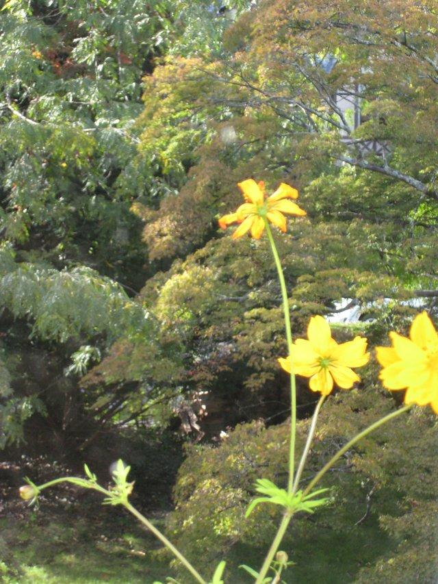 imagesevents7771flowers10-2011001-JPG.jpe