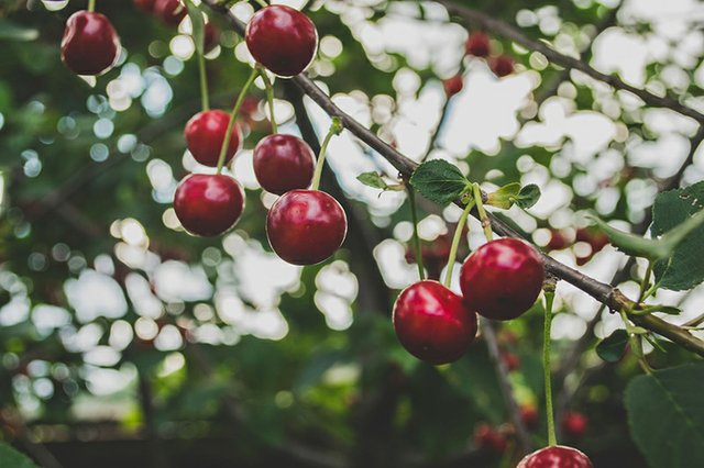 Cherries-web.jpg