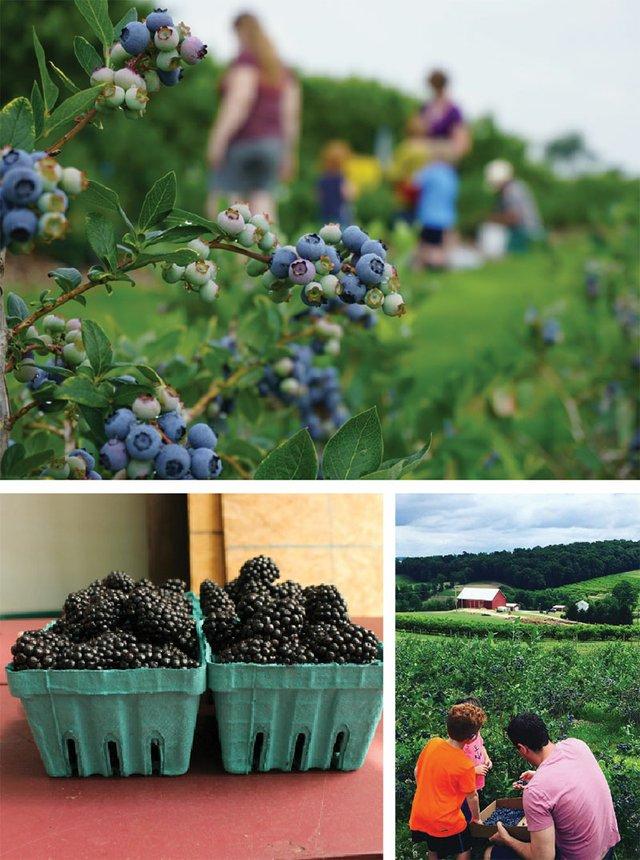 berriescollage-web.jpg