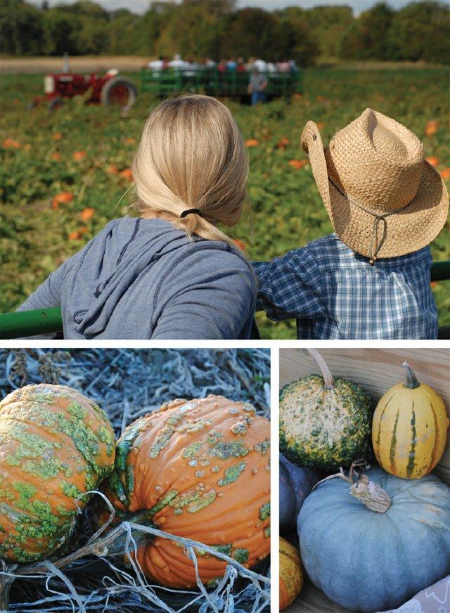 pumpkincollage-web copy.jpg