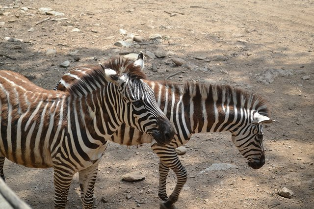 Catoctin Zoo 4 - Credit Destination Gettysburg.jpg