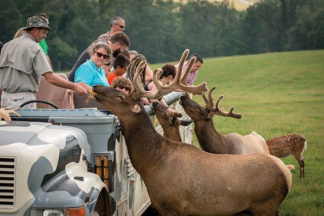 Outdoors_Lake_Tobias_Wildlife_SafariTour.jpg