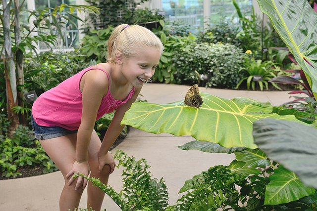 Hershey_Conservatory_Butterfly_Atrium_Girl_credit_Hershey_Foundation_2__9cf0d028-fa09-4e20-81d1-6442f00ff762.jpg
