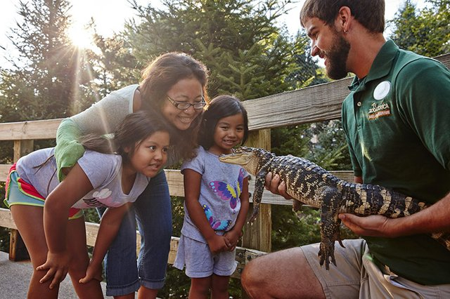 ZooAmerica.15.Animal.Encounter.Alligator.01 - Credit ZooAmerica.jpg