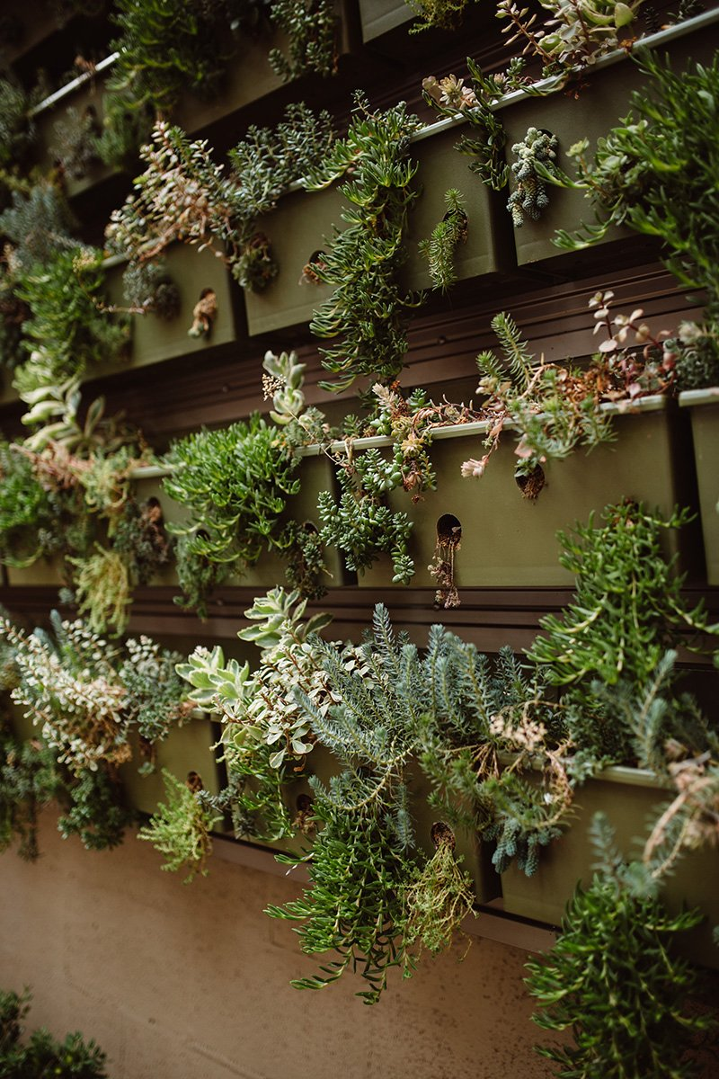 Living walls are growing up all over the place - Susquehanna Style