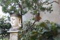 buddha with chimes.jpg