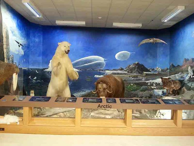 Nixon Park (Arctic).jpg