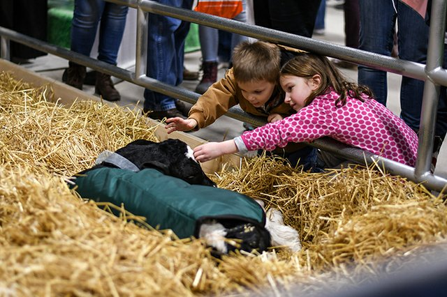 Farm Show Media 5.jpg