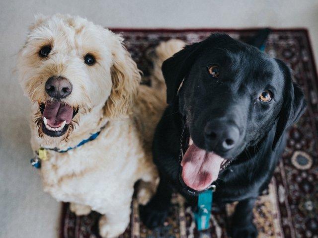dog pair.jpg