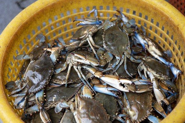 crabs2.jpg