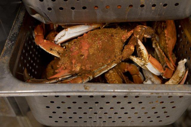 crabs5.jpg