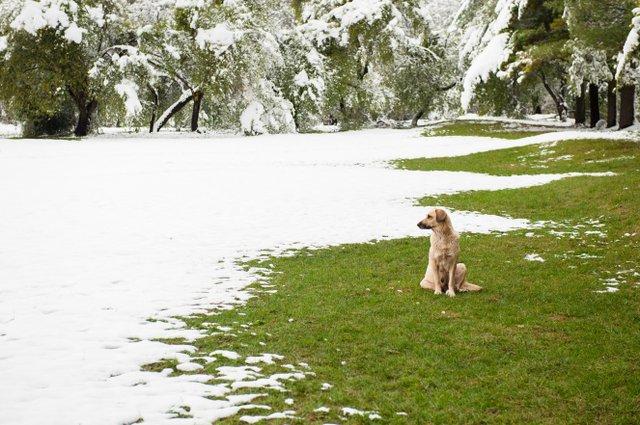 Snow on grass.jpg