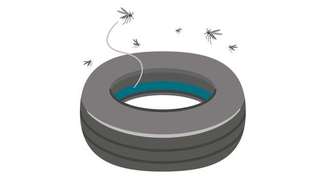 Mosquito Tire.jpg