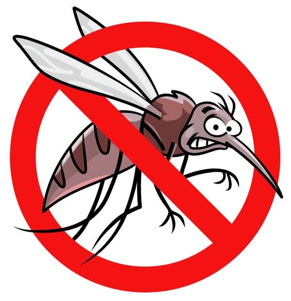 No Mosquito.jpg