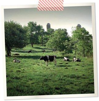 cow.jpg.jpe
