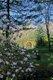 10130-springarchway.jpg.jpe