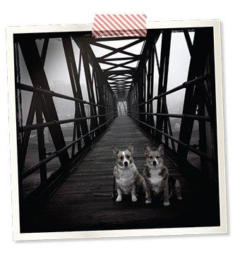 dogs.jpg.jpe