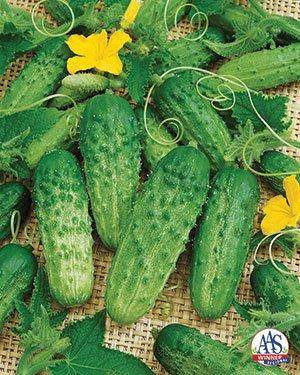 Cucumber_PickABushel-logo1.jpg.jpe