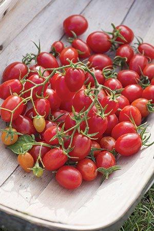 Tomato_Fantastico-fruitInBowl-resize.jpg.jpe