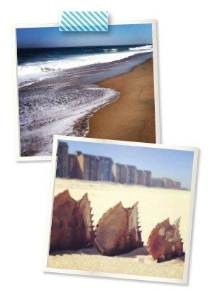 beach.jpg.jpe