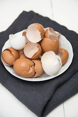 SQS_Eggs_27.jpg.jpe