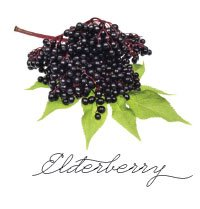 elderberry.jpg.jpe