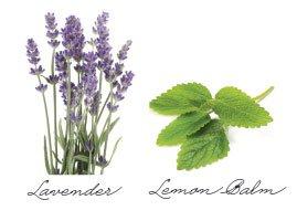 lavendar.jpg.jpe
