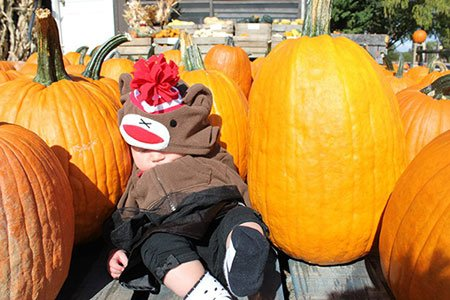 holdy-pumpkin-patch.jpg.jpe