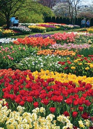 71627_Idea_Garden_Albee_Larry.jpg.jpe