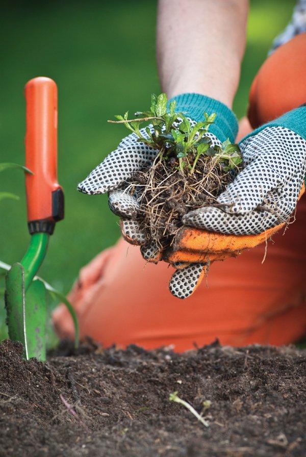 Gardening.jpg.jpe