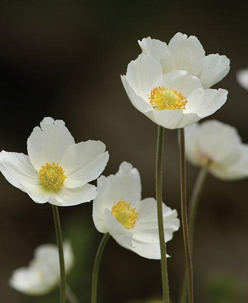 anemone.jpg.jpe